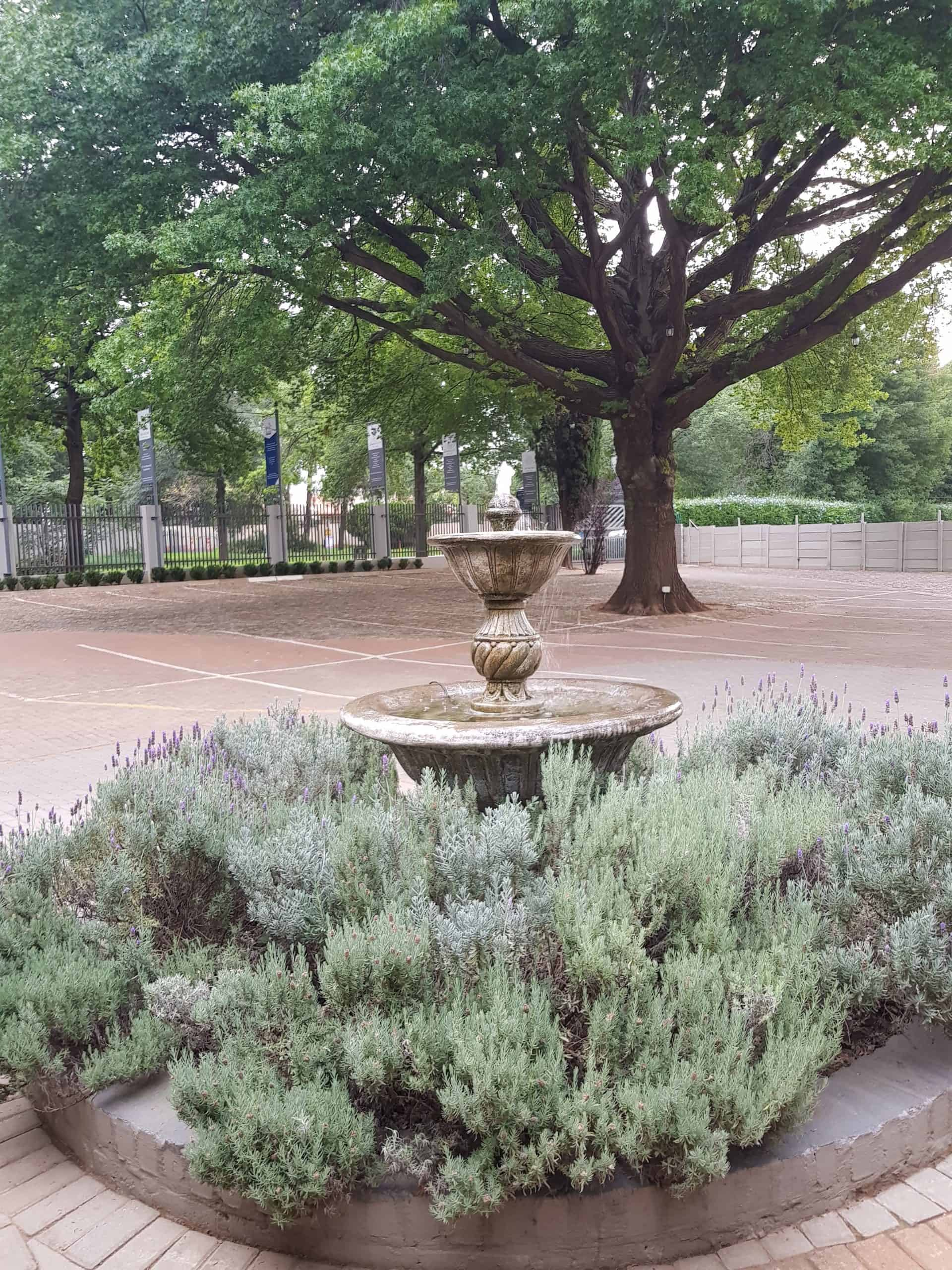 oaktree in parkign lot with a water feature in front scaled